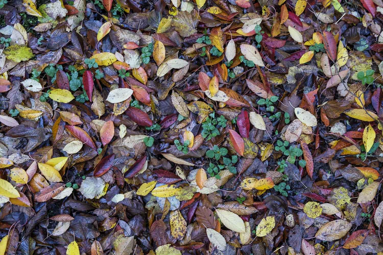 Nu faller de sista löven 2018 098-2